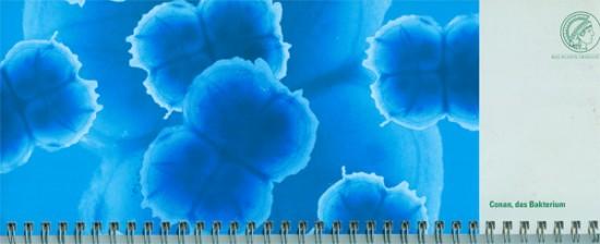 """""""Conan the bacterium"""" - 4er Zelle von Deinococcus radiodurans, einer sehr widerstandsfähigen Bakterienart. Original Foto: Renate Albrecht Idee und illustration: J.M. Harms"""