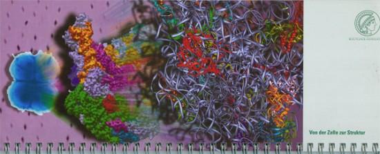 Der Weg zur Struktur: Röntgendiffraktionsbild als Hintergrund, Zellen von Deinococcus radiodurans liefern die ribosomalen Partikel der großen (50S) Untereinheit von denen experimentell die Elektronendichte bestimmt wird.gemessen werden ind die wiederum die Struktur modelliert wird (Bandmodell). Idee und Illustration: J.M. Harms